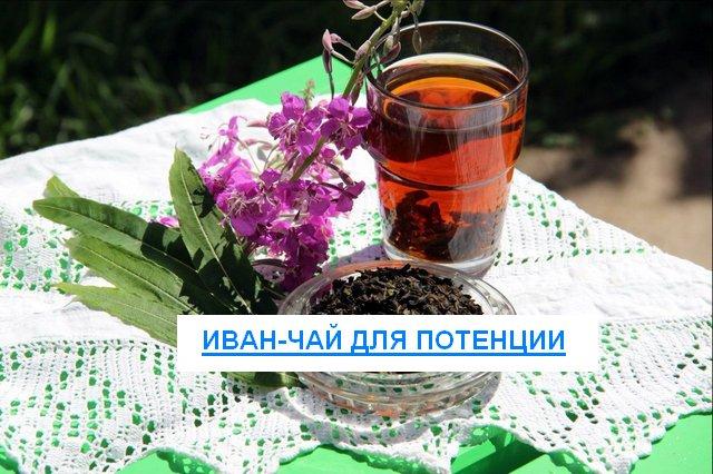 Иван-чай для повышения потенции. Как приготовить Иван-чай для повышения потенции