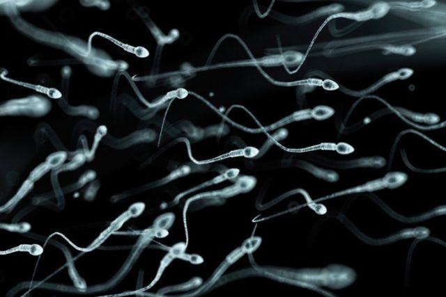 бактериоспермия что это