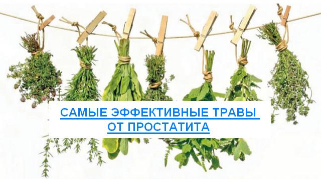 травы от простатита самые эффективные
